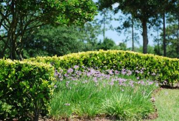 Landscaping Division