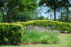 css-landscaping-projects (11)